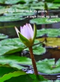 Lily Quotes & Lily flowers quotes