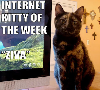 INTERNET KITTY OF THE WEEK