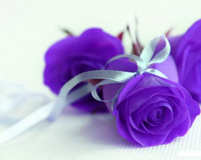 ảnh đẹp hoa hồng xanh để tải về