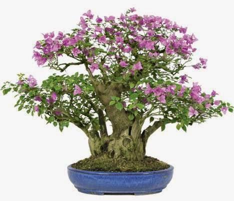 bonsai dari galian alam atau tunggul