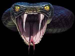 http://2.bp.blogspot.com/-YahHswcQpSk/TWqczLe1bOI/AAAAAAAAAf8/EF04YV_uGac/s1600/serpente1.jpg