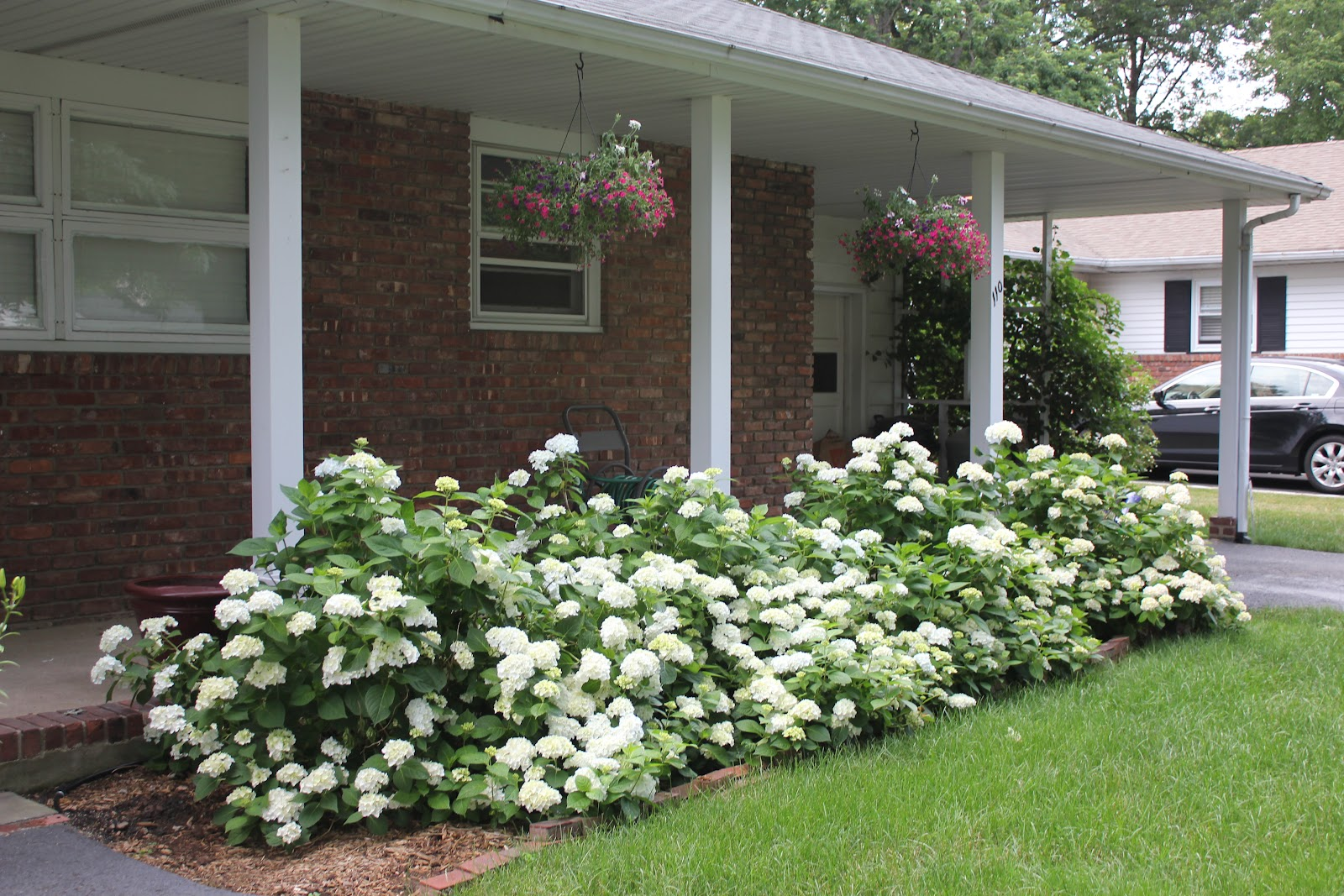 Garden state roses it 39 s all about layering for How to plant bushes in front of house