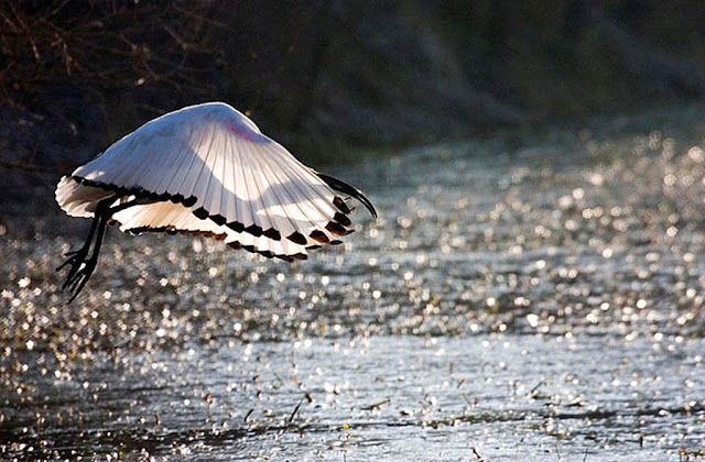 красивые фотографии птиц