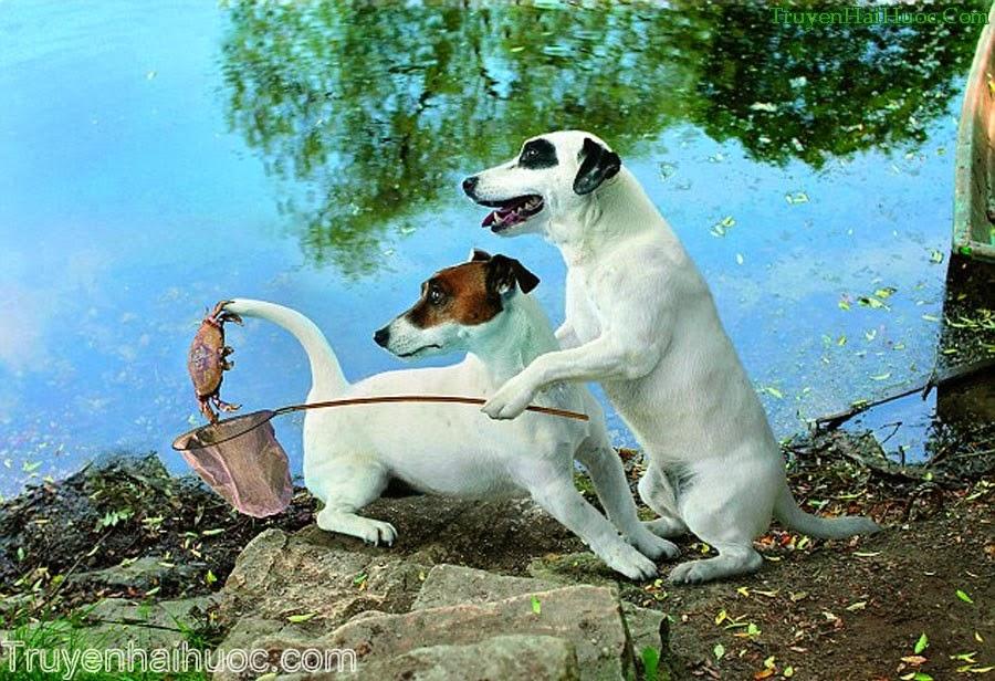 снасть собака