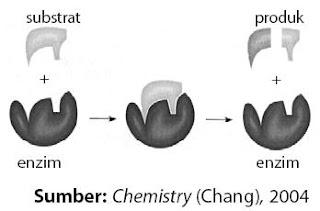 Skema kerja enzim
