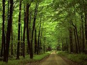 Hermosos y Soprendentes Paisajes de Bosques y Selvas