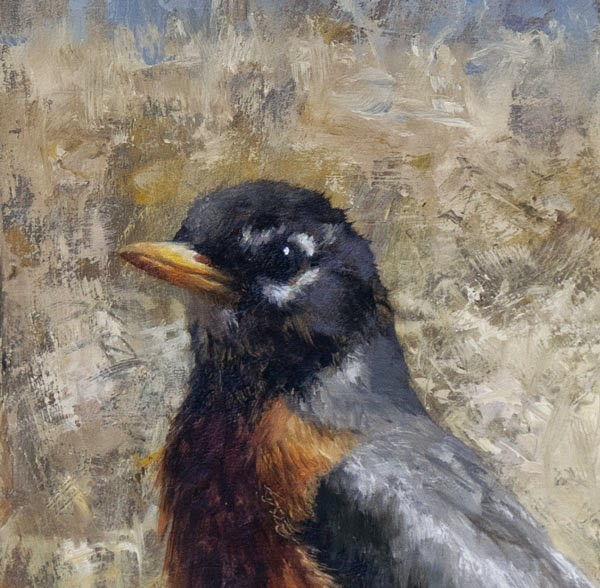 American Robin original oil painting by Shannon Reynolds ornithological avian