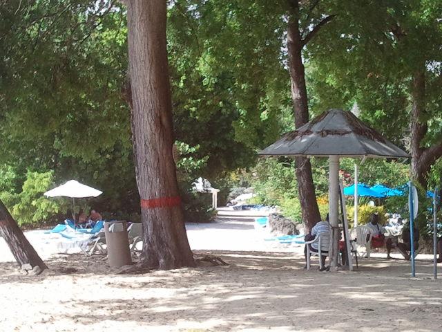 La Manzanilla - el árbol más peligroso del mundo por varias razones