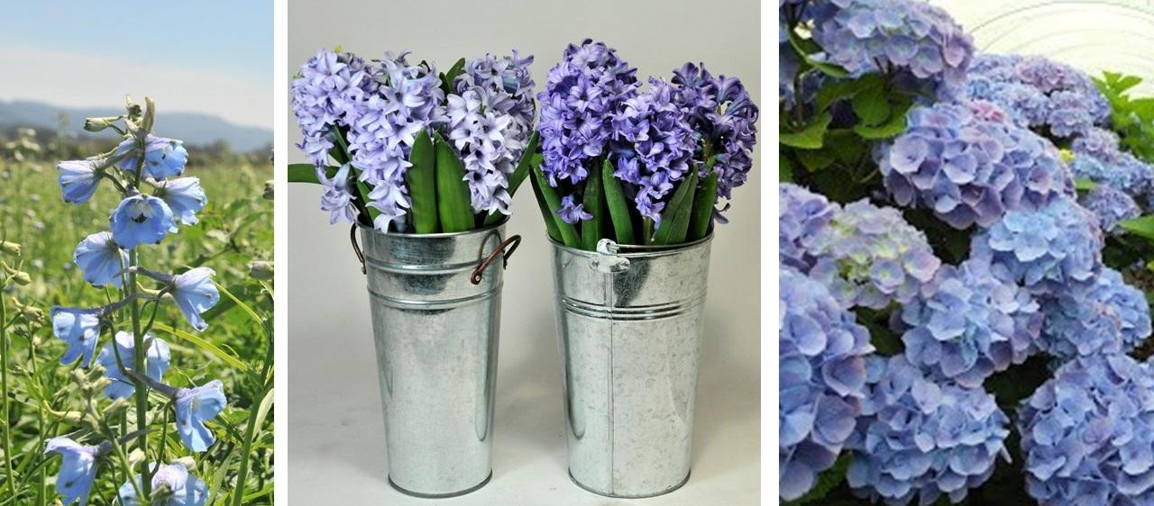 Planting 2015's trendy colors • GreenView Fertilizer