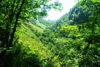 Tramo inicial boscoso en el ascenso al pico Priena