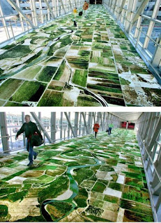 rug cleaning cambridge uk