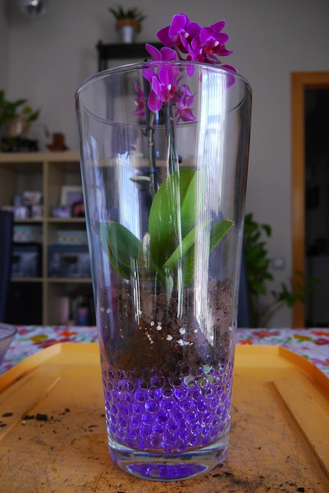 Mr washisan orqu dea mariposa mini plantada en gel dentro de jarr n de cristal - Decorar jarrones de cristal ...
