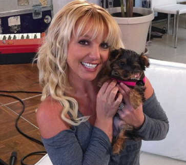 Britney Spears holding her small brown terrier puppy named Hannah