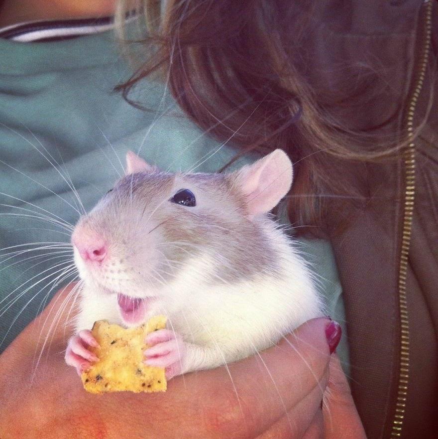 rato com dona