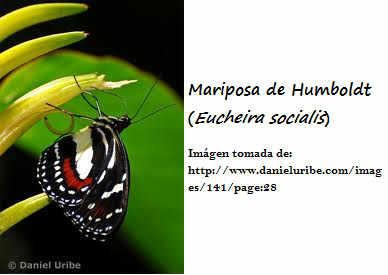 RESERVA DE LA BIOSFERA SIERRA GORDA :v Abio-mariposadehumboldt