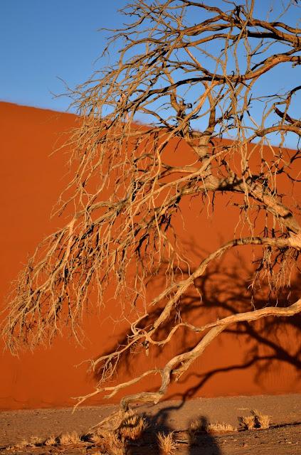 Tree and sand dune in Sossusvlei