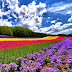 Spring in Hokkaido, Japan