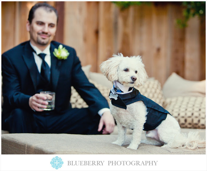 beautiful Lafayette park hotel wedding photography groom dog puppy