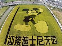 Gambar Unik Mickey Mouse Terbuat dari Tanaman Padi