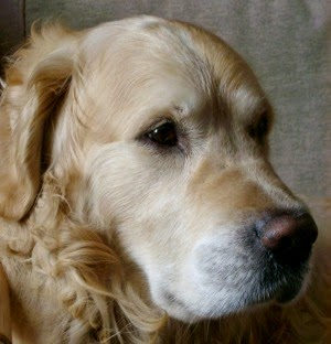 Pet Insurance Matters: AKC Pet Health Insurance Review