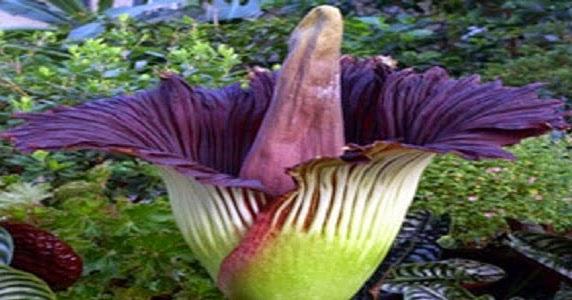 Flora Langka di Indonesia, Tumbuhan yang Dilindungi ...