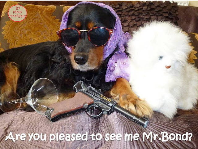 Molly The Wally Does James Bond!