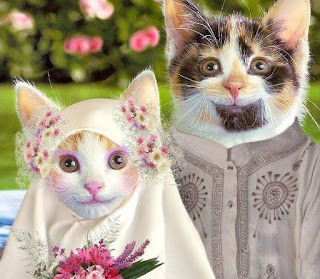 foto kucing yang lucu dan cantik