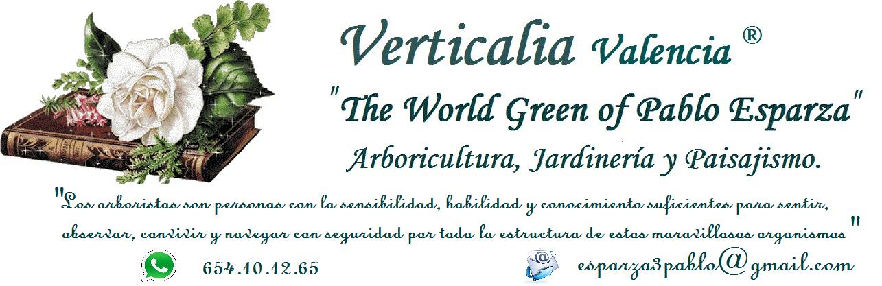 Verticalia Jardinería. El Blog de Poda Valencia