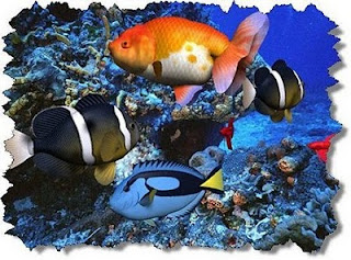 Download 3D Aquatic Life Screensaver Fish