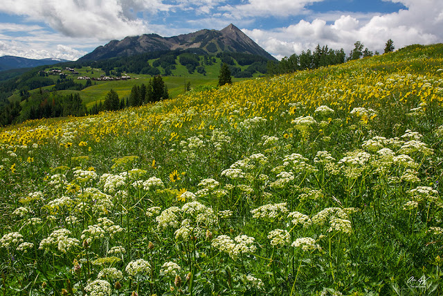 Mount Crested Butte in summer with lush alpine wildflowers