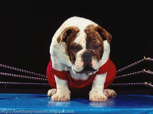 Funny dog in the ring