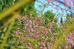 Das Rosa in Nachbars Garten...^^