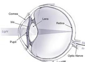 Cara kerja Fungsi Lensa mata