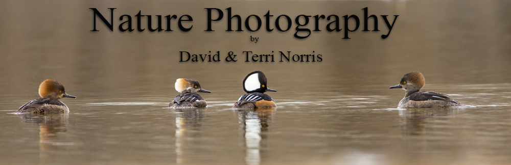 Nature Photography by David and Terri Norris