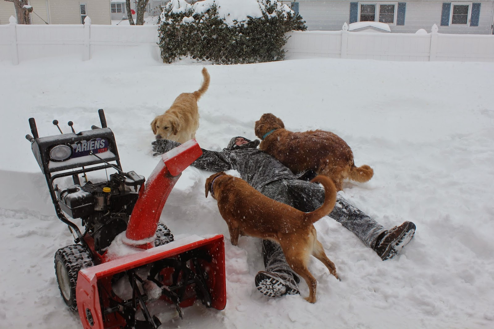 dogs having fun in snow with owner