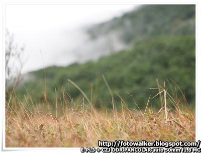 大帽山 (Tai Mo Shan)
