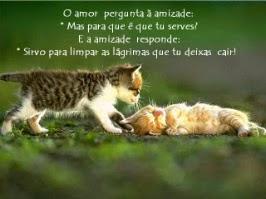 Há amor até nos animais