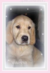 .♥.Dionne my dog.♥.