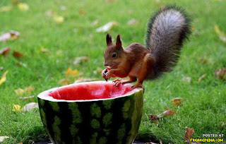 Esquilo engraçado
