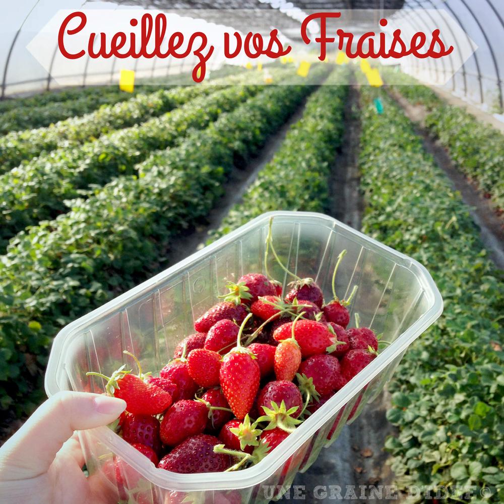 J 39 ai test pour vous 14 cueillez vos fraises au clos de la fontaine une graine d 39 id e - Comment cueillir des fraises ...