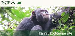 Kalinzu Ecotourism Site