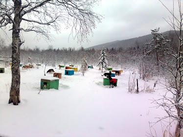 Зима, однако... - (29 апреля)
