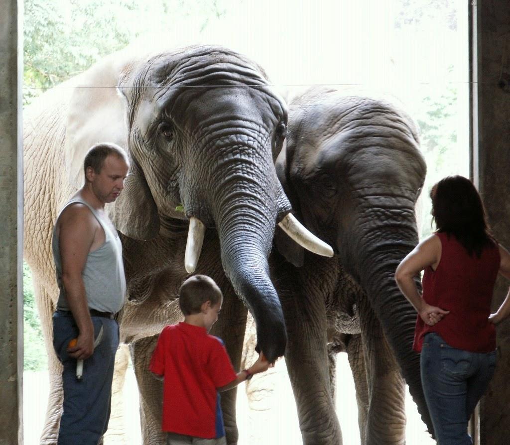 Zoológico - Zoo Basel Suíça