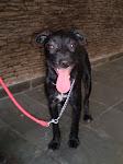 Cássia, cadelinha resgatada há um ano na Praça da Liberdade.