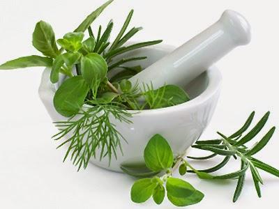 tanaman obat untuk menyembuhkan stroke