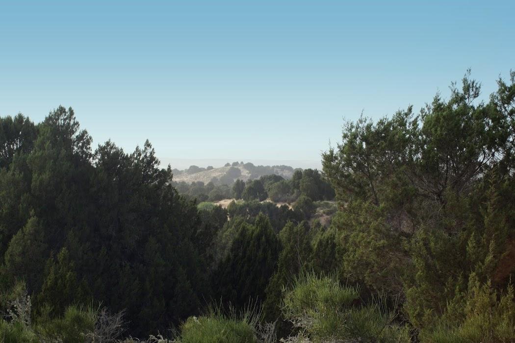 Forêt maritime d'Essaouira
