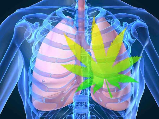 Fumar maconha prejudica os pulmões?