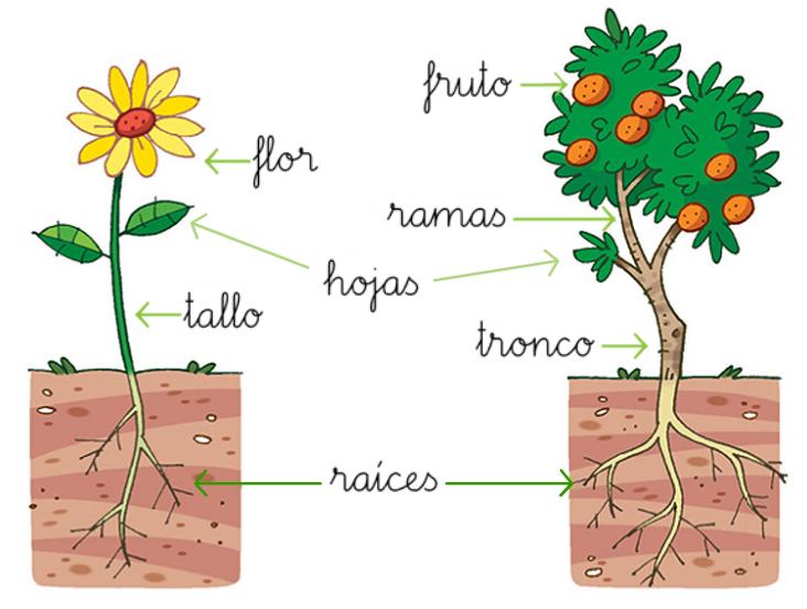 Cabecitas pensantes en acci n plantas - Cuales son las plantas con flores ...