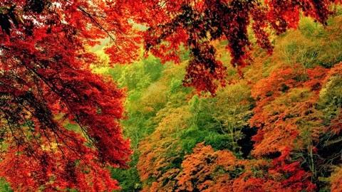 анализ стихотворения шумели листья облетая