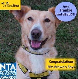 http://www.dogstrust.org.uk/rehoming/dog/1085457/frankie#.Ut_6JrTFIr0